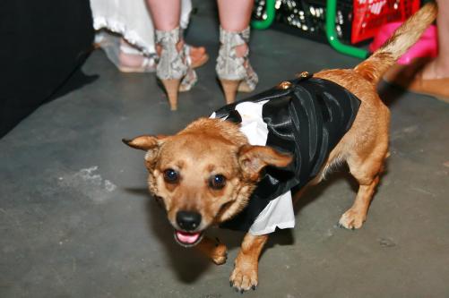 Hund auf Hochzeit
